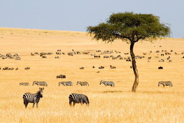 african grassland features The african savanna is really a spread-out area in general this rolling grassland's longitude mark is 40 degrees west, while its latitude is 30 degrees south.